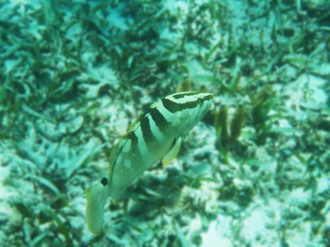 snorkel-05